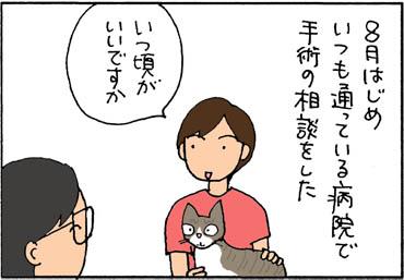 ネコの去勢時期はいつかの4コマ猫漫画