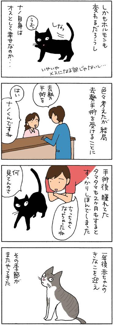 猫漫画 猫の去勢手術について