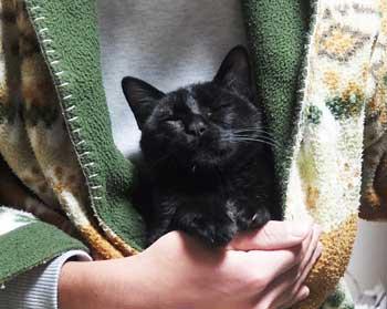 服の中で暖をとる猫