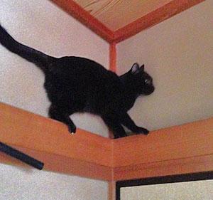 長押に引っかかる猫の4コマ猫漫画