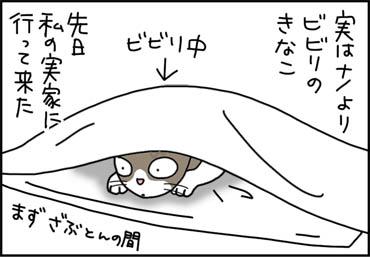 ビビる猫の漫画