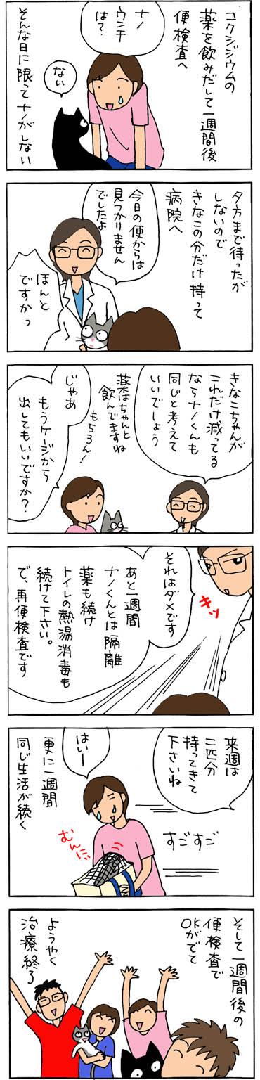 コクシジウムの治療が終了する猫漫画