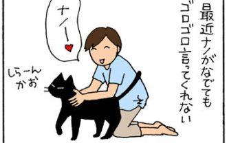 見つめるだけでゴロゴロ言う猫の4コマ猫漫画