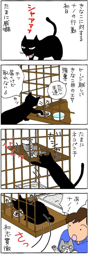 2目がやって来た初日4コマ猫漫画
