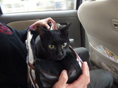 車が怖くて細くなる猫