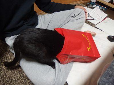 ハンバーガーの袋に入る黒猫