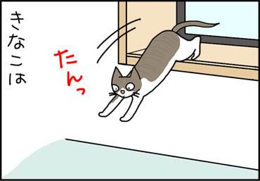 せっかちな猫の漫画