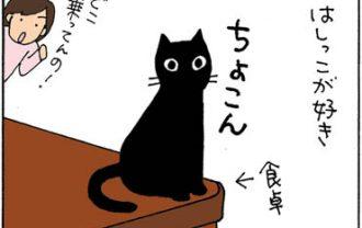 はしっこすぎて落ちる猫の4コマ猫漫画