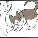 エリザベスカラーは重い4コマ猫漫画
