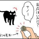 毛玉で遊ぶ猫漫画