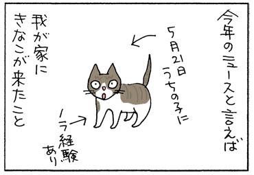 新しい猫がやって来た4コマ猫漫画