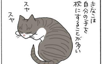 猫の寝姿の4コマ猫漫画
