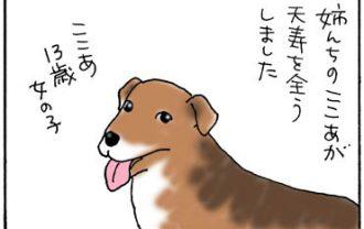 姉の犬がなくなった4コマ漫画
