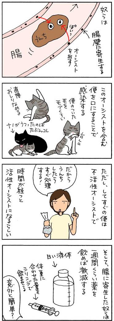 コクシジウムとは?の猫漫画