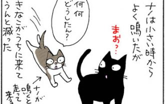 構ってもらえない猫の4コマ猫漫画