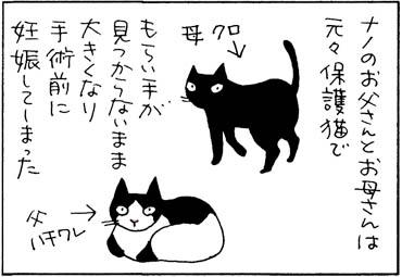 猫がやってきたいきさつの猫漫画