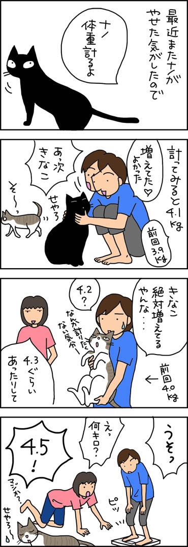 きなこの体重が増えていた4コマ猫漫画