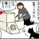 段ボールハウスに入る猫の4コマ漫画