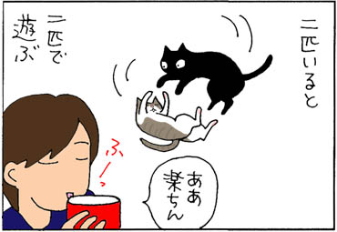 2匹飼いのメリットの猫漫画
