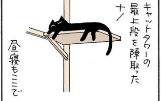キャットタワーから落ちるネコの4コマ猫漫画