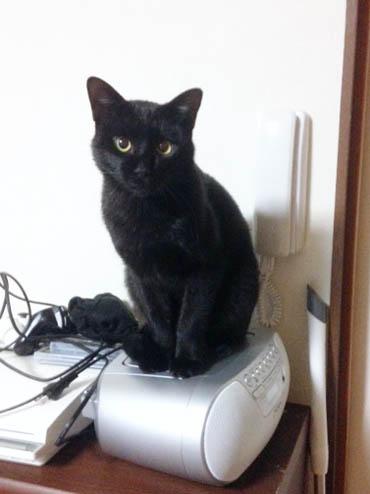 CDに乗る猫