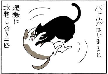 仲良し2匹のバトルの猫漫画
