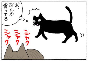 食の好みが違う猫の4コマ漫画