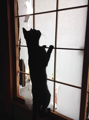 ふすまを登る猫