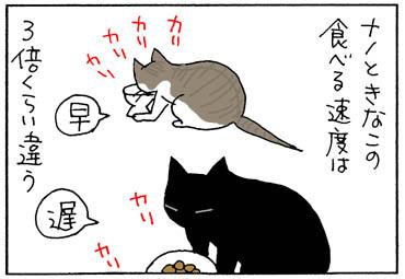 食べる速度の違う2匹の4コマ猫漫画