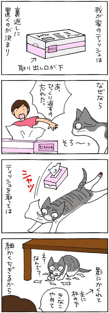 テッシュで遊ぶ猫の4コマ猫漫画
