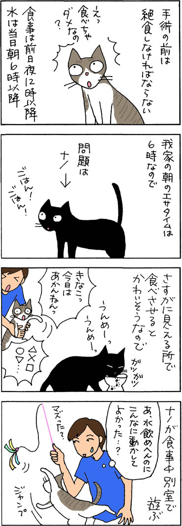 避妊手術当日の猫漫画