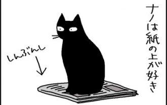 紙が好きな猫の4コマ猫漫画
