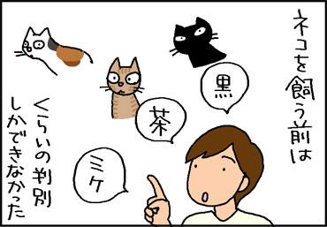猫の顔の違いが分かる4コマ猫漫画