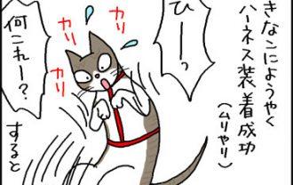 ハーネスを付ける猫の4コマ猫マンガ
