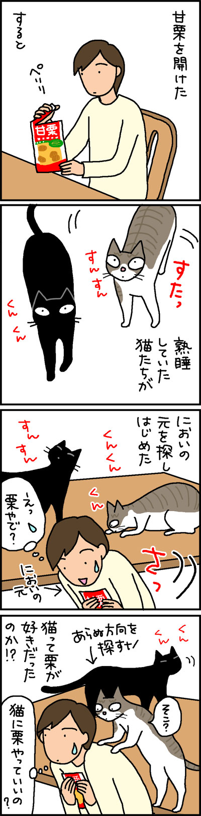 甘栗にたかる猫の4コマ猫漫画
