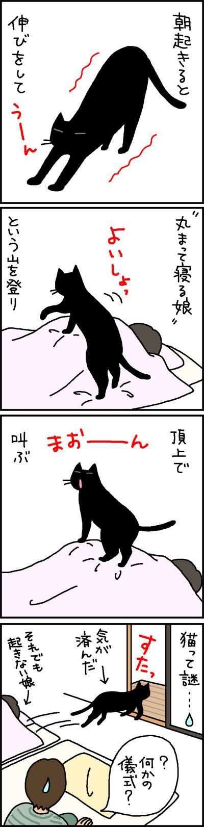 頂上で吠える猫の4コマ猫漫画