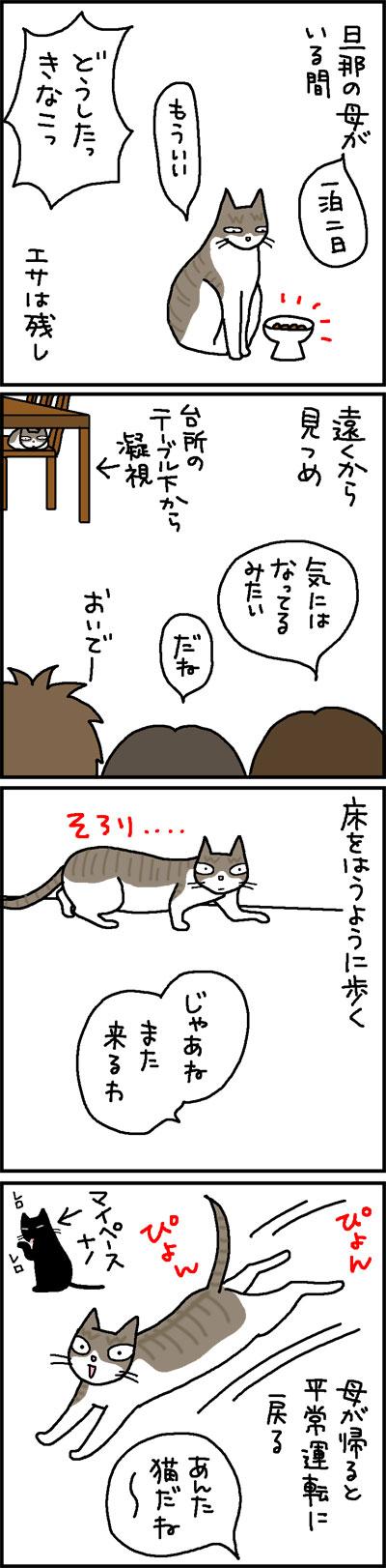 見かけない人が来た時のネコの反応の4コマネコ漫画
