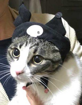 猫のかぶりものをかぶったきなこ