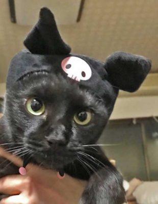 猫のかぶりものをかぶったナノ
