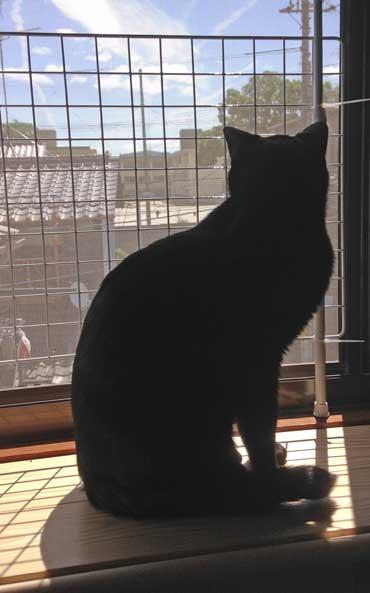 猫用出窓DIY