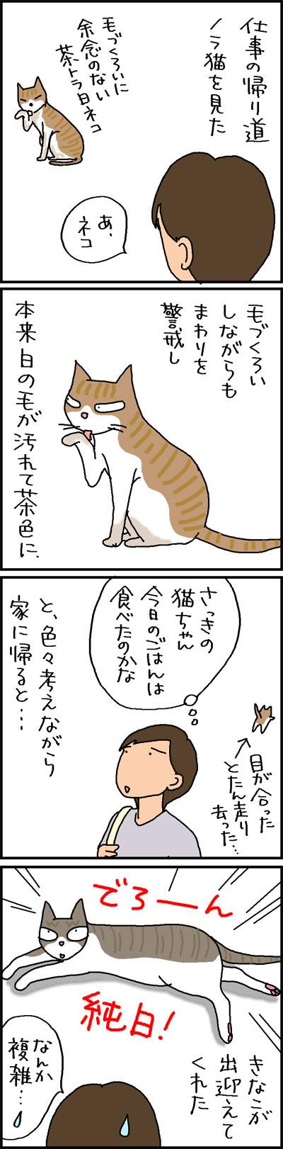 ノラ猫と家猫の違いの4コマ猫漫画あc