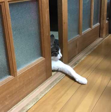 クーラーのきいた部屋と聞いてない部屋にまたがって寝る猫の4コマ猫漫画