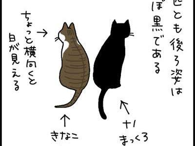 2匹の猫を判別する4コマ猫漫画