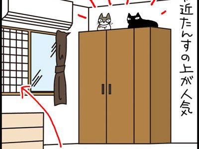 たんすの上に乗れる猫と乗れない猫の4コマ猫漫画