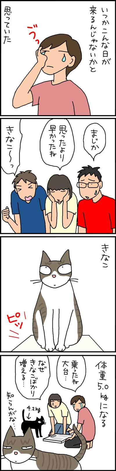 太りつつある猫の4コマ猫漫画