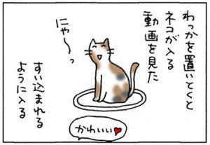 わっかに入らない猫の4コマ漫画