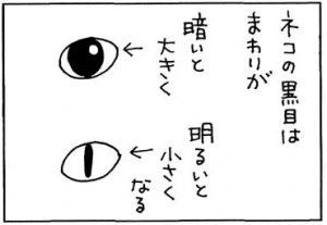 猫の目は光で変わる4コマ猫漫画
