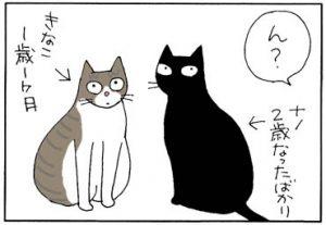 兄が妹に負けた4コマ猫漫画