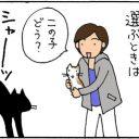 2匹目の選び方4コマ猫漫画