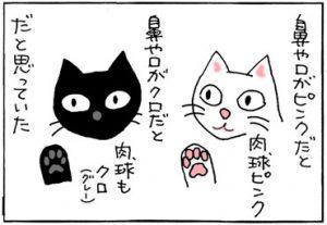 肉球と毛の色の4コマ猫漫画